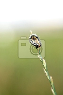 Сaterpillar