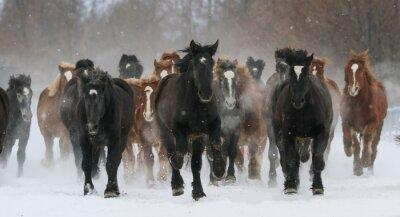 Wall mural 雪原を走る馬