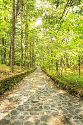 Wall mural 長野県軽井沢町 新緑の幸福の谷