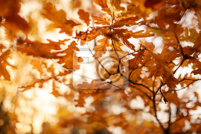 Yellow abstract autumnal leaves background