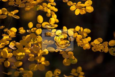 Yellow autumn leaves on tree
