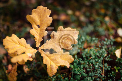 Yellow autumnal leaves background