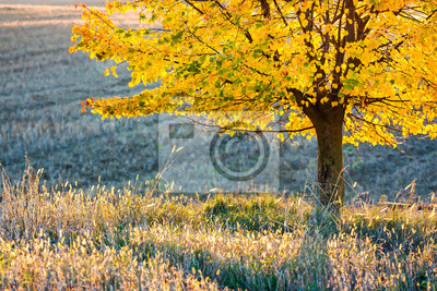 yellow colored autumn tree