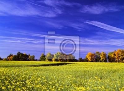 yellow on blue