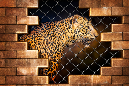 Wall mural Young leopard internal the cage in concept of resist torture and torture the wildlife