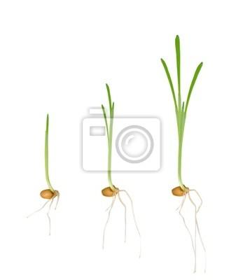 Young seedlings of plants