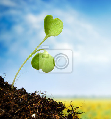 Young sprout on sky  background