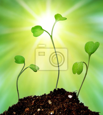Young sprouts on green background