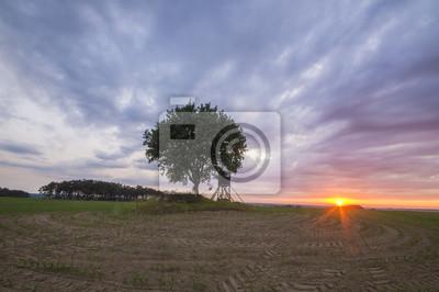 Zachód słońca nad polem,samotne drzewo i wieża myśliwska