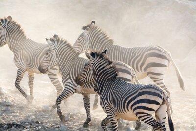 Wall mural Zebras running, namibia, africa