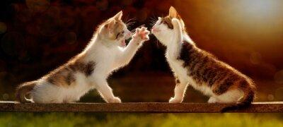 Wall mural zwei junge Katzen spielen auf einem Holzbrett im Gegenlicht