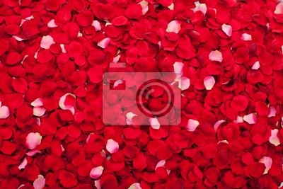 A bed of roses