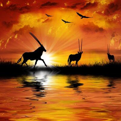 Antelope on a beautiful sunset background