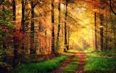 Poster Autumn forest scenery with rays of warm light