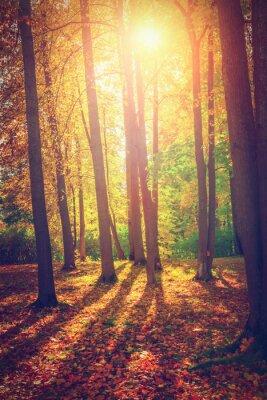 Poster Autumn landscape