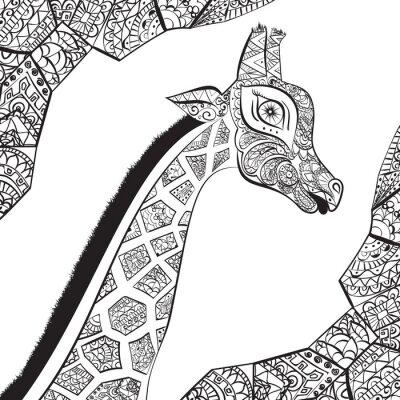 Poster Beautiful adult Giraffe. Hand drawn Illustration of ornamental giraffe. isolated giraffe on white background. The head of an ornamental giraffe