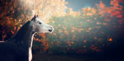 Poster beautiful arabian horse with white head on wonderful  nature background