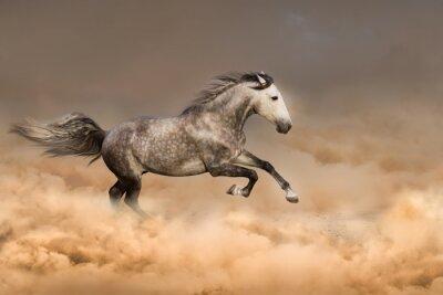 Poster Beautiful horse run gallop in dust