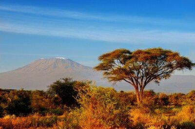 Poster Beautiful Kilimanjaro mountain after sunrise in morning, Kenya,Amboseli national park, Africa