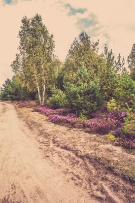 Poster Beautiful rural landscape with blooming heather