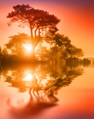 Beautiful trees reflecting in lake water at sunset