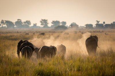 Poster Beautiful wildlife at Chobe National Park, Botswana