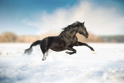 Poster Black horse run in the snow