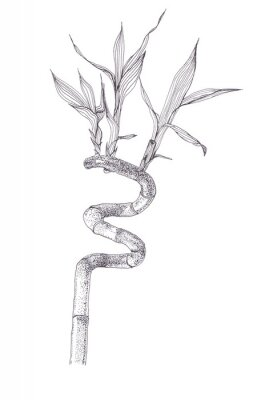 Poster Black ink dots drawing sketch of bamboo branch isolated on white background. Hand drawn illustration of beautiful bamboo brunch spiral with leaves.