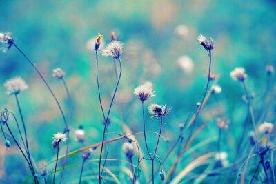 Poster Blue vintage herbal field