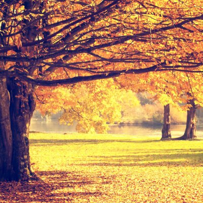 Poster Blurry autumn scene