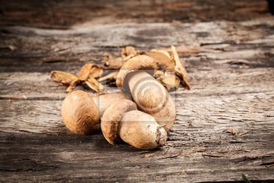 Poster Boletus mushrooms