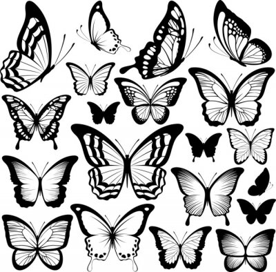 Poster butterflies black silhouettes