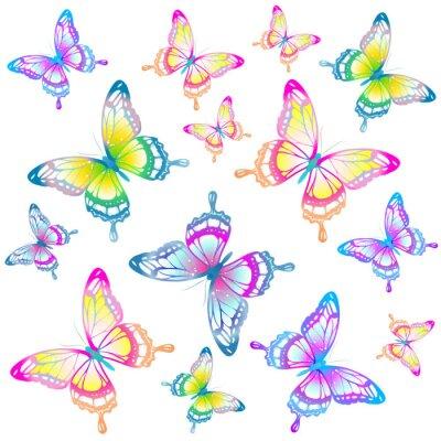 Poster butterflies design