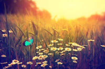 Poster Butterfly flying spring meadow daisy flowers