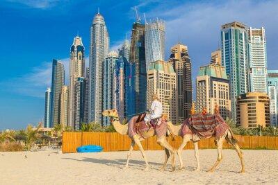Poster Camel in Dubai Marina