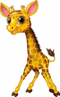 Poster Cartoon baby giraffe isolated on white background