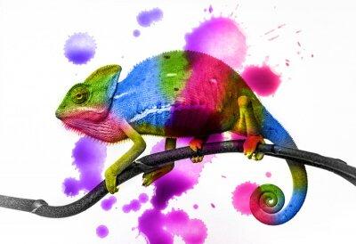 Poster  chameleon - colors