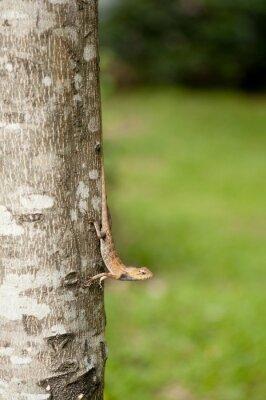 Poster Changeable lizard on tree trunk