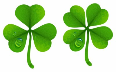 Poster Clover leaves with drops of dew. Lucky Clover leaf. Four-leaf and trifoliate clover