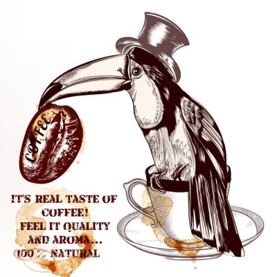 Poster Coffee vector background or poster with hand drawn toucan bird h
