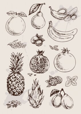 Poster collection of  hand drawing isolated  fruits