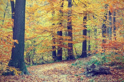 Poster Colorful autumn trees in forest, vintage look