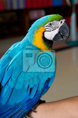 Poster Colorful blue parrot macaw
