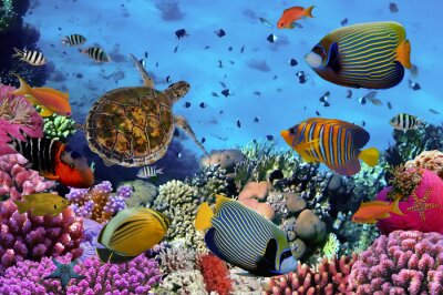 Poster colorful coral reef with many fishes