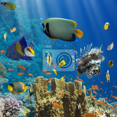 Poster Coral and fish in the Red Sea.Egypt