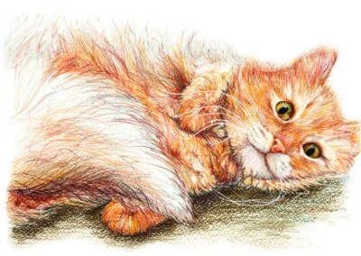 Poster Cute nice ginger fluffy cat hand drawn art