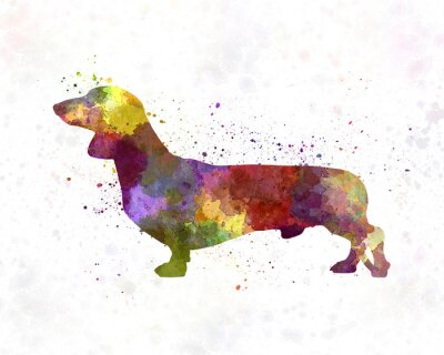 Poster Dachshund in watercolor