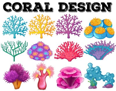 Poster Different kind of coral design