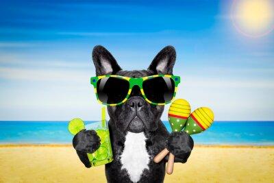 Poster dog summer beach cocktail