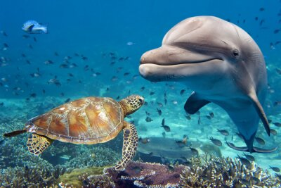 Poster dolphin and turtle underwater on reef
